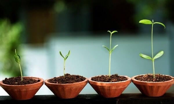8 tegn på følelsesmæssig vækst