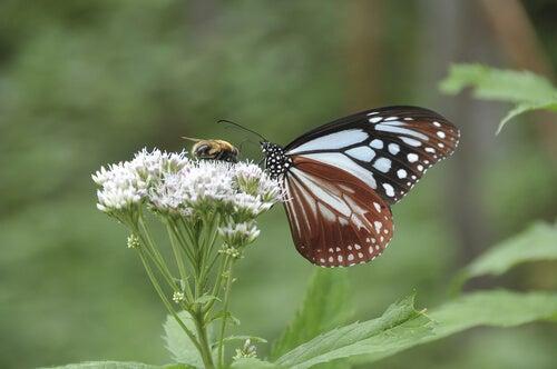 Flyv som en sommerfugl og stik som en bi