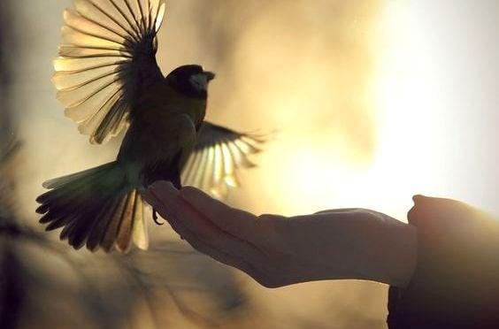 En fugl lander på en hånd
