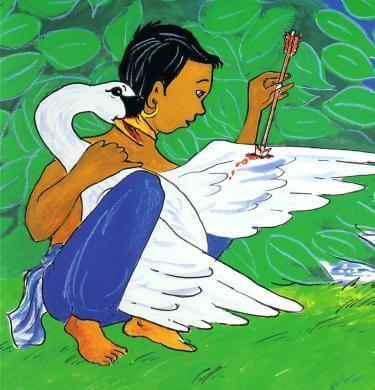 En dreng fjerner pil fra en svanes vinge