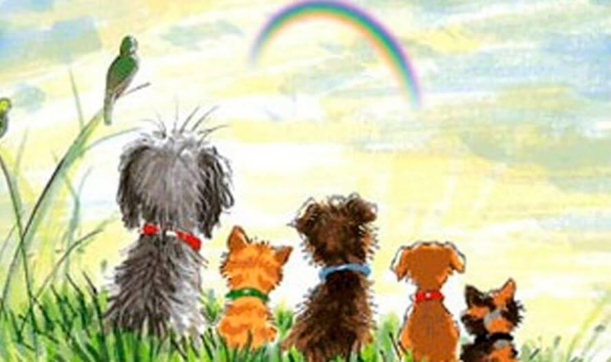 Hunde sidder og kigger på en himmel