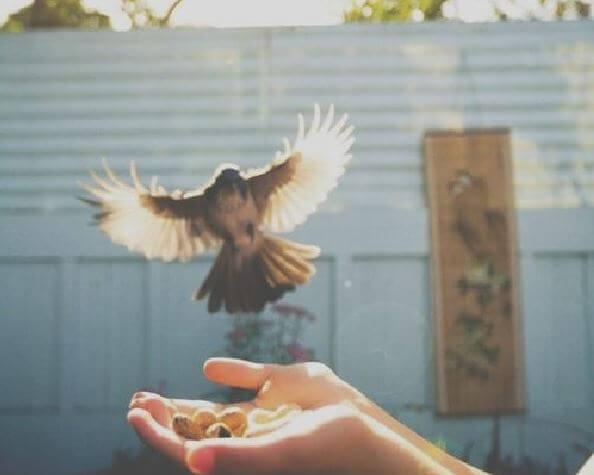 Fugl lander på en hånd