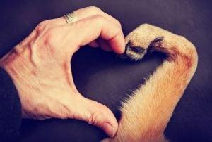 En hånd og en hundepote danner et hjerte