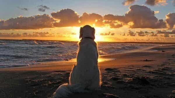 Sorgen over at miste sit kæledyr er svær at glemme