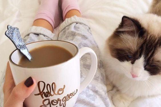 Kvinde drikker kaffe i seng med kat
