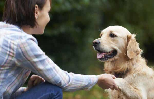 Hvordan genkender hunde ansigter?