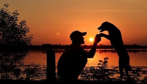Mennesker og hunde foran solnedgang