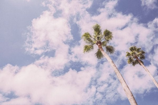 Palmer på en blå himmel symboliserer afslapning