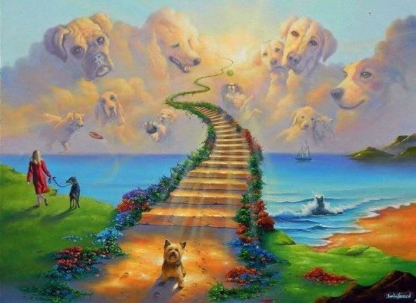 Legenden om regnbuebroen, vores kæledyrs hvilested