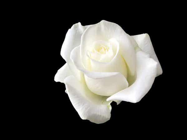 Sophie Scholl: kvinden, der stod foran Hitler med en hvid rose