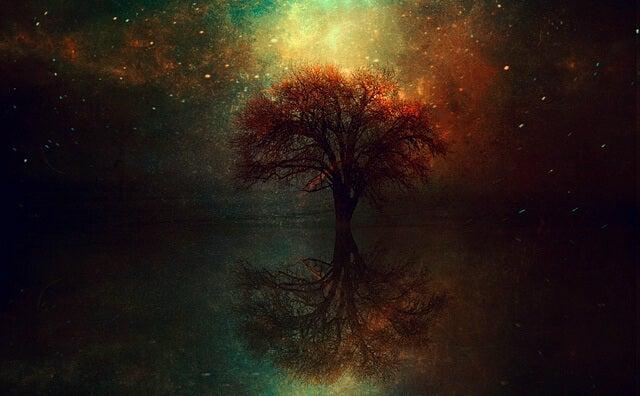 Et træs spejlbillede i vand