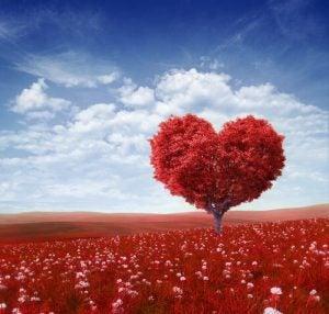 Rødt træ formet som et hjerte