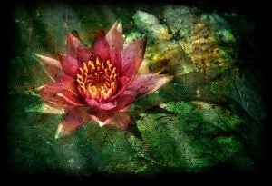 Lotusblomsten