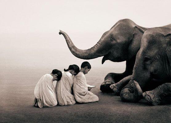 Børn sidder foran elefant