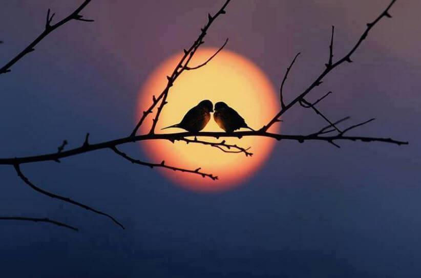 To fugle på gren foran måne