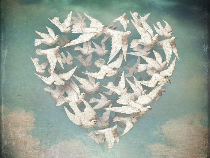 Fugle danner et hjerte