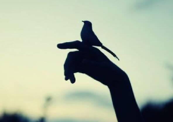 Silhuet af fugl, der sidder på hånd