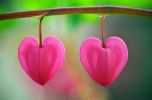 Blomster formet som hjerter