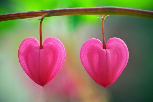En blomst i ørkenen: at genkende kærligheden
