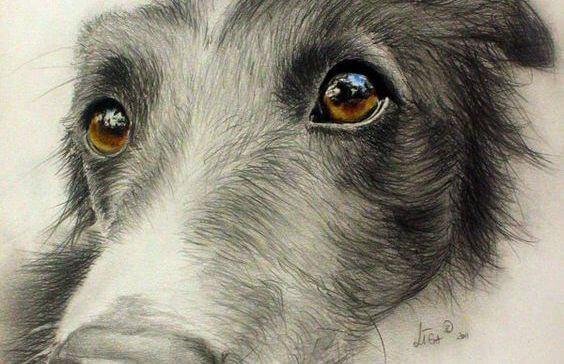 En hund viser, hvordan et dyrs øjne kan udtrykke kærlighed