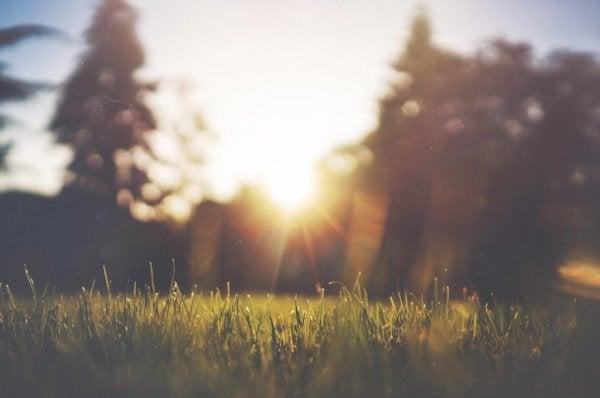 Solen over et landskab