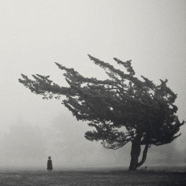 Person står under vindblæst træ