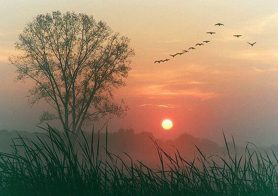 Landskab med solnedgang og fugle. Lad tiden flyde