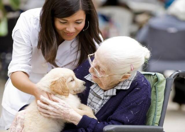 Hunde kan være en stor hjælp mod mange sygdomme, bl.a. alzheimers for ældre mennesker. Bella og George er ikke et ene tilfælde