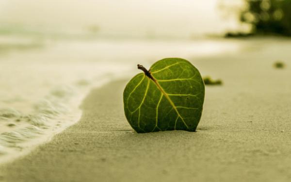 Blad i sand ved hav
