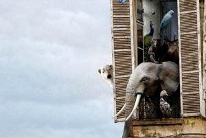 Elefant i vindue