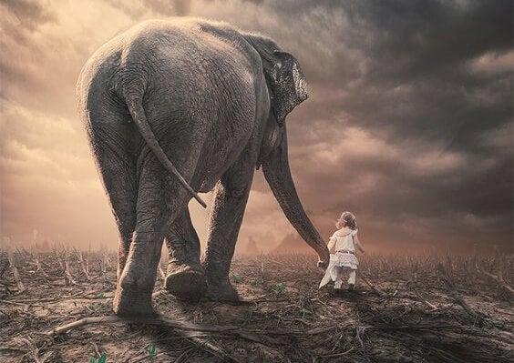 Lille barn går sammen med elefant