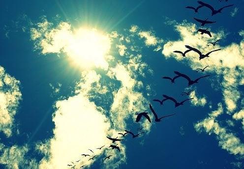 fugle flyver frihed. Man skal værdsætte sit liv.