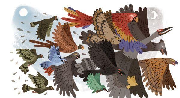 Forskellige fugle flyver sammen