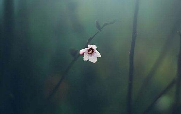 En enkelt blomst