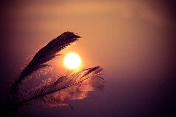 Fjer foran solopgang