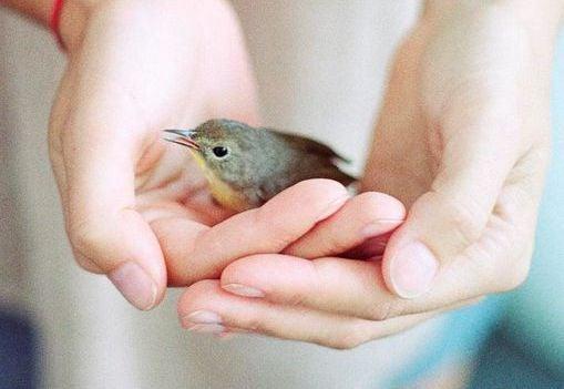 Lille fugl i to hænder