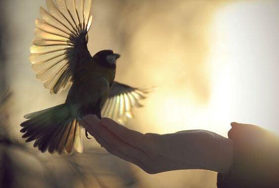 Fugl i hånd oplever frihed