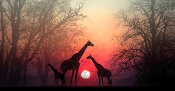 Stop op, lad din sjæl indhente dig: en smuk afrikansk historie