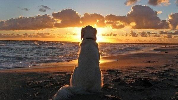 Hunde kan lære os at leve et simpelt liv