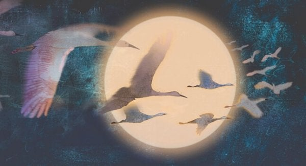 Svaner flyver foran måne