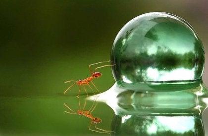 Myre og vand bobbel. Overanstrengelse