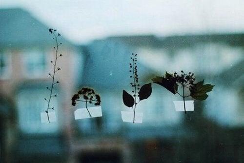 Små planter tapet fast til vindue
