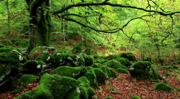 Skovbadning: en modgift mod stress