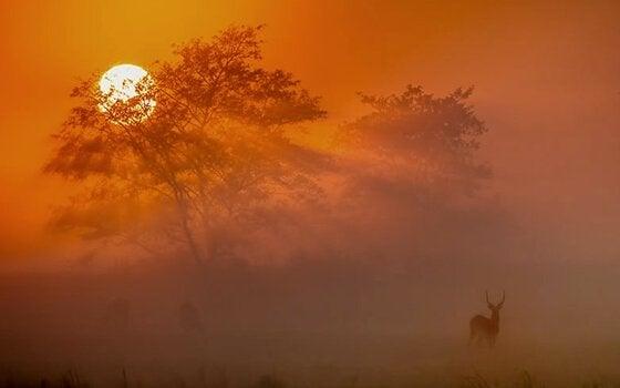 Solnedgang på savanne fylder din sjæl med ro