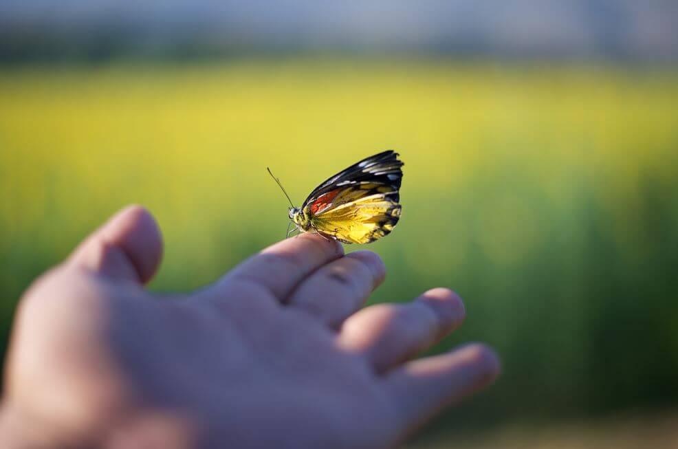 Sommerfugl på hånd