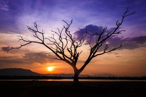 Træ foran solnedgang
