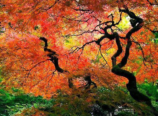 En skov kan være et helbredende sted ifølge taoisme