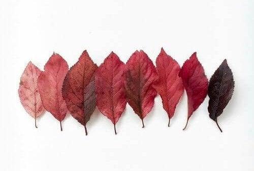 Blade i røde nuancer fra lys til mørk