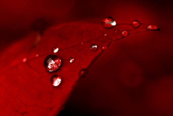 Rødt blad med dråber viser farvernes psykologi
