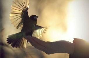 Fugl lander i hånd